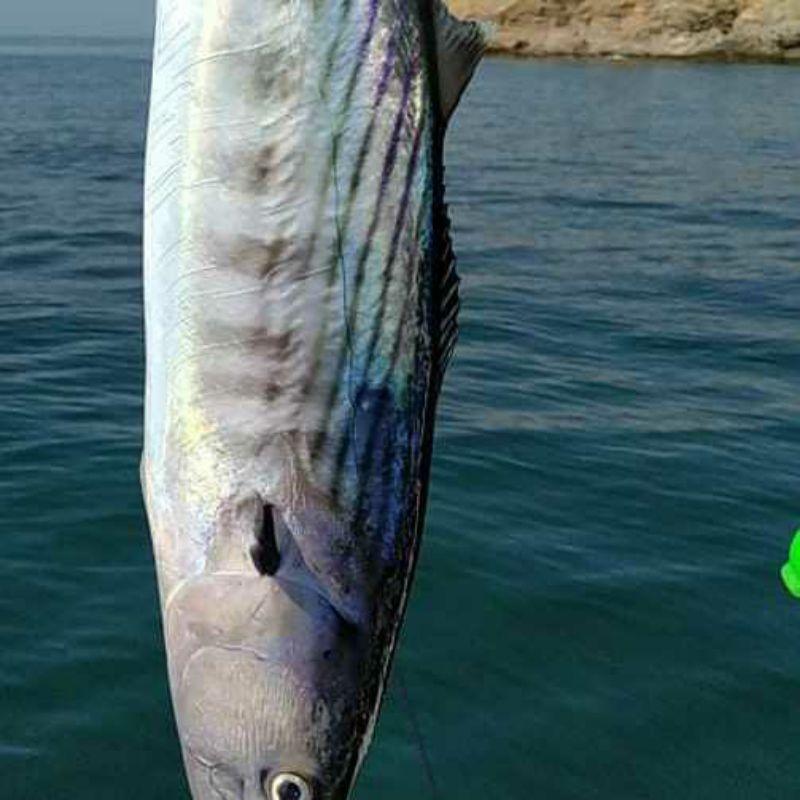 Page detail header image fish species Atún Blanco - Thunnus alalunga