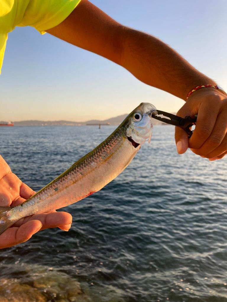 Page detail header image fish species Tarpon - Megalops atlanticus