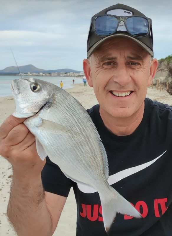 Page detail header image fish species Gilthead Seabream - Sparus aurata