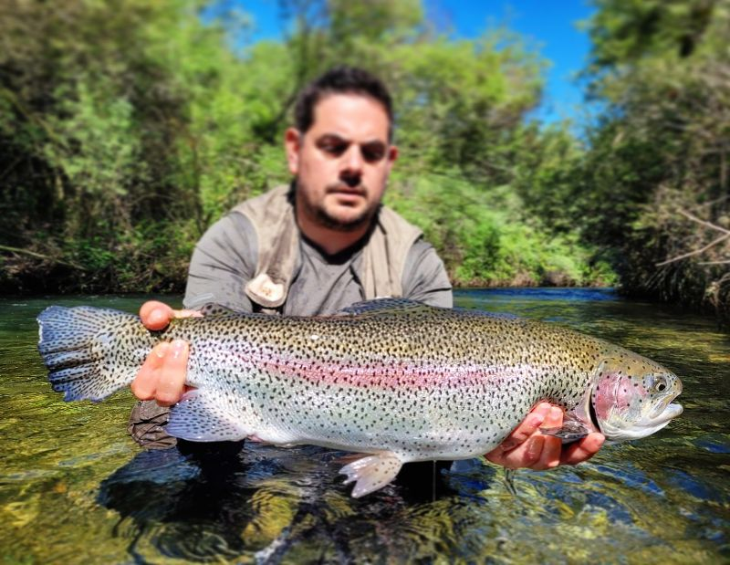 Page detail header image fish species Rainbow Trout - Oncorhynchus mykiss