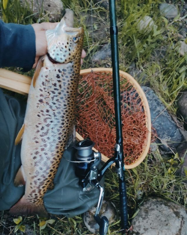 Page detail header image fish species Brown Trout - Salmo trutta